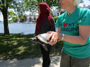 rescued turtle 3