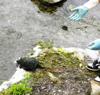 Snapping Turtle release 2
